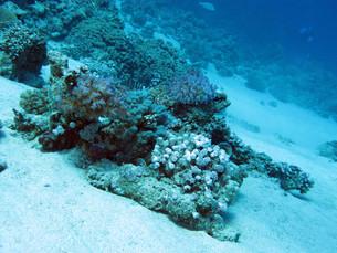underwater_worldの写真素材 [FYI00696867]