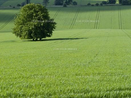 environmentの写真素材 [FYI00696888]