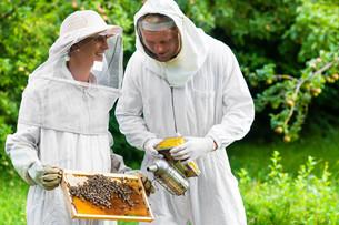 beesの写真素材 [FYI00697306]