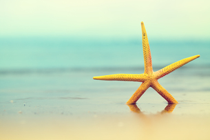 starfishの素材 [FYI00697311]