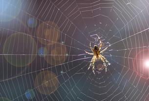 spider webの写真素材 [FYI00697434]