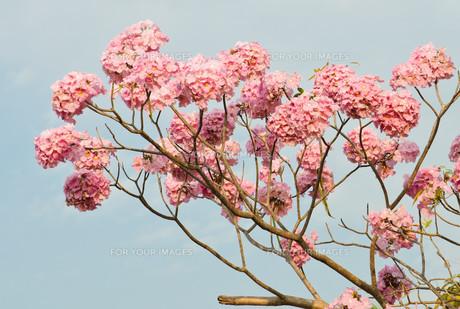 plants_flowersの写真素材 [FYI00697895]