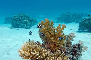 underwater_worldの写真素材 [FYI00698158]