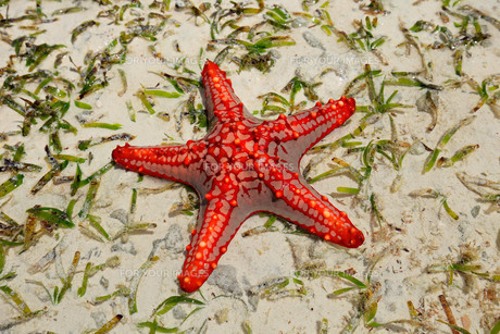fishes_crustaceansの素材 [FYI00699007]