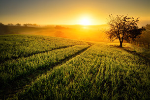 rural idyll in golden lightの写真素材 [FYI00699046]