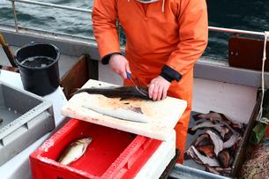 fishermen gutting his catchの素材 [FYI00699339]