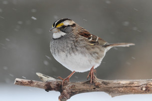 birdの写真素材 [FYI00699341]