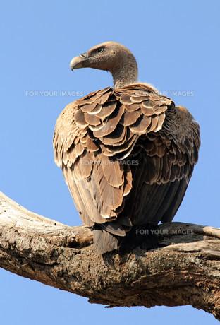birdの写真素材 [FYI00699553]