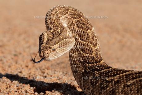 reptiles_amphibiansの写真素材 [FYI00699647]
