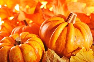 pumpkinsの写真素材 [FYI00699750]