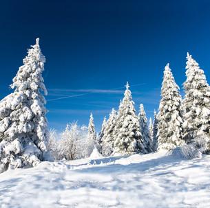 sunny winter landscapeの写真素材 [FYI00699833]