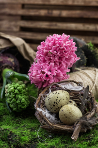 blooming spring flowers hyacinth and secateursの写真素材 [FYI00700197]