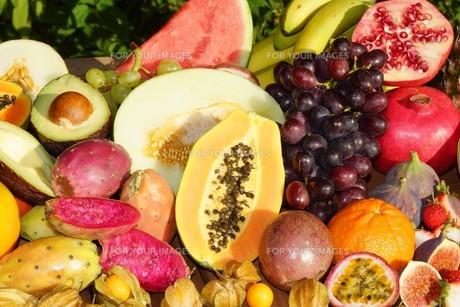 tropical fruitsの写真素材 [FYI00700365]