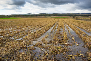 floods in the corn field after harvestの写真素材 [FYI00700451]