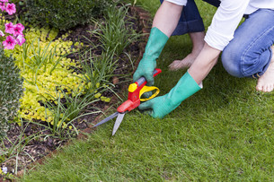 hands with gloves and pruning shears while gardeningの写真素材 [FYI00700661]