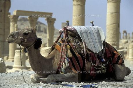 syriaの素材 [FYI00701292]