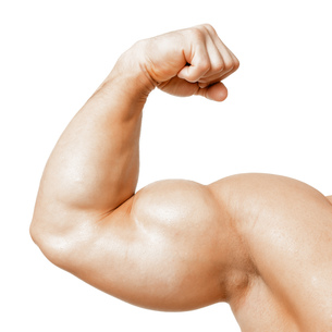 muscular bicepsの写真素材 [FYI00701626]