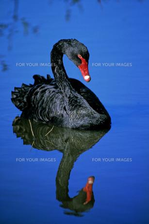 birdの写真素材 [FYI00701693]