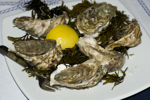 oystersの写真素材 [FYI00702033]