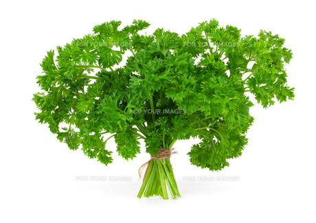 fresh green parsley on a white backgroundの素材 [FYI00702213]