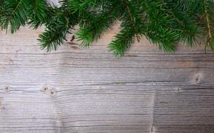 pine branches balls backgroundの写真素材 [FYI00702751]