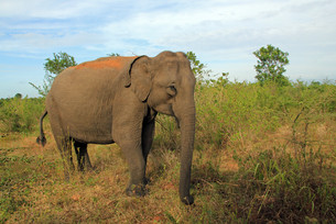 elephantの素材 [FYI00703147]