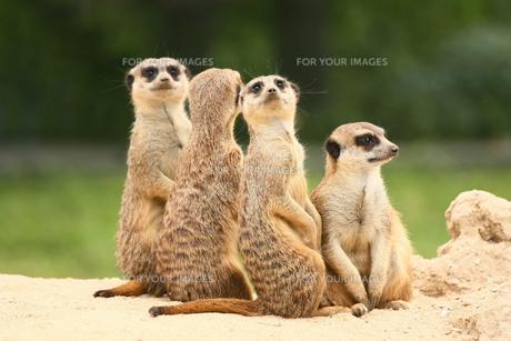 mammalsの素材 [FYI00703162]