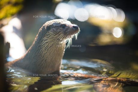 mammalsの写真素材 [FYI00703502]