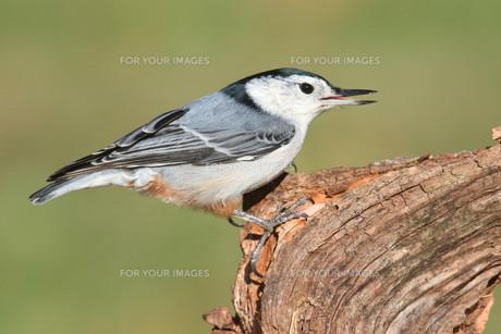 birdの写真素材 [FYI00704742]