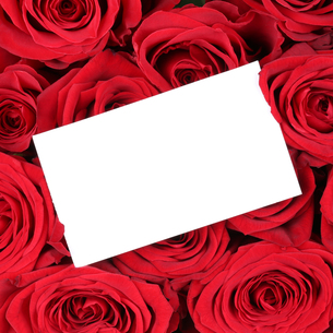 empty sign with copy space on red roses for valentine's day,mother's day or birthdayの写真素材 [FYI00704829]