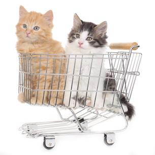 shoppingの写真素材 [FYI00704943]
