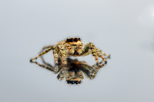 insects_spidersの写真素材 [FYI00705460]