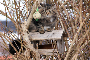 a cat in the aviaryの写真素材 [FYI00707705]