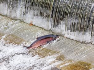 fishes_crustaceansの素材 [FYI00708140]