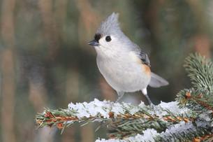 winterの写真素材 [FYI00708741]