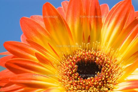 plants_flowersの写真素材 [FYI00709638]
