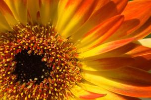 plants_flowersの写真素材 [FYI00709639]