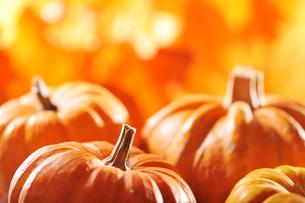 pumpkin backgroundの写真素材 [FYI00709906]