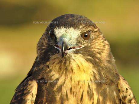 birdの写真素材 [FYI00711022]