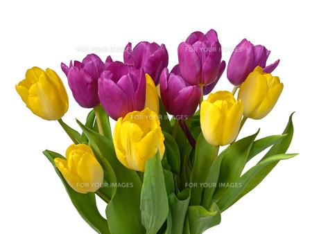 plants_flowersの素材 [FYI00713416]