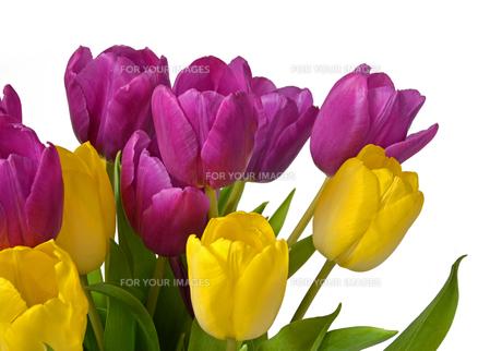 plants_flowersの素材 [FYI00713418]