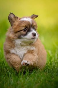 funny puppyの写真素材 [FYI00713477]
