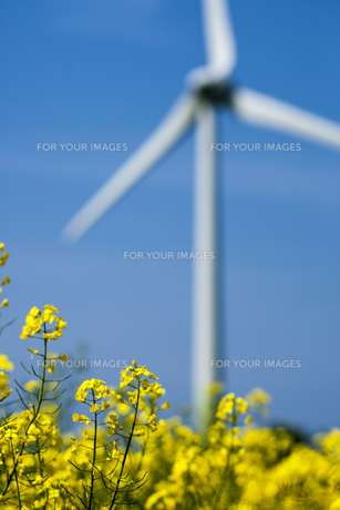 greenの写真素材 [FYI00714396]