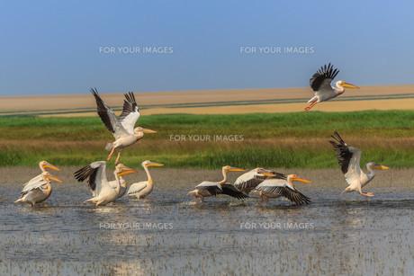 birdsの写真素材 [FYI00715149]