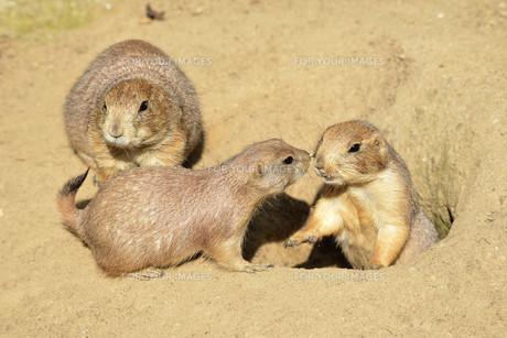 mammalsの写真素材 [FYI00716709]