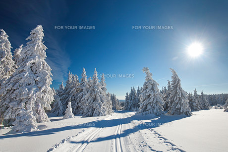 winter forestの素材 [FYI00716845]