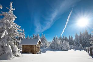 winter forestの素材 [FYI00716847]