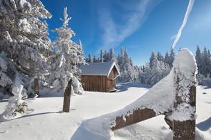 winter forestの素材 [FYI00716850]