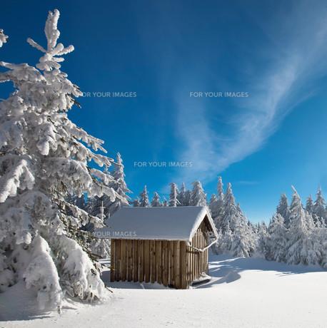 winter forestの素材 [FYI00716851]