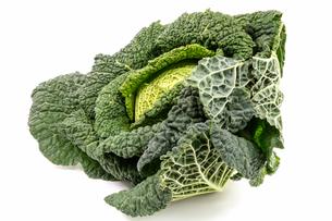 savoy cabbageの写真素材 [FYI00717648]